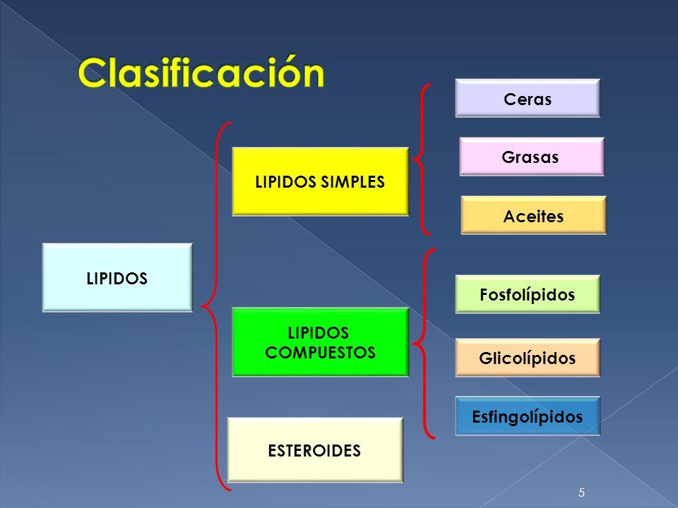 5 LIPIDOS LIPIDOS SIMPLES LIPIDOS COMPUESTOS Grasas Ceras Fosfolípidos Glicolípidos Esfingolípidos ESTEROIDES Aceites