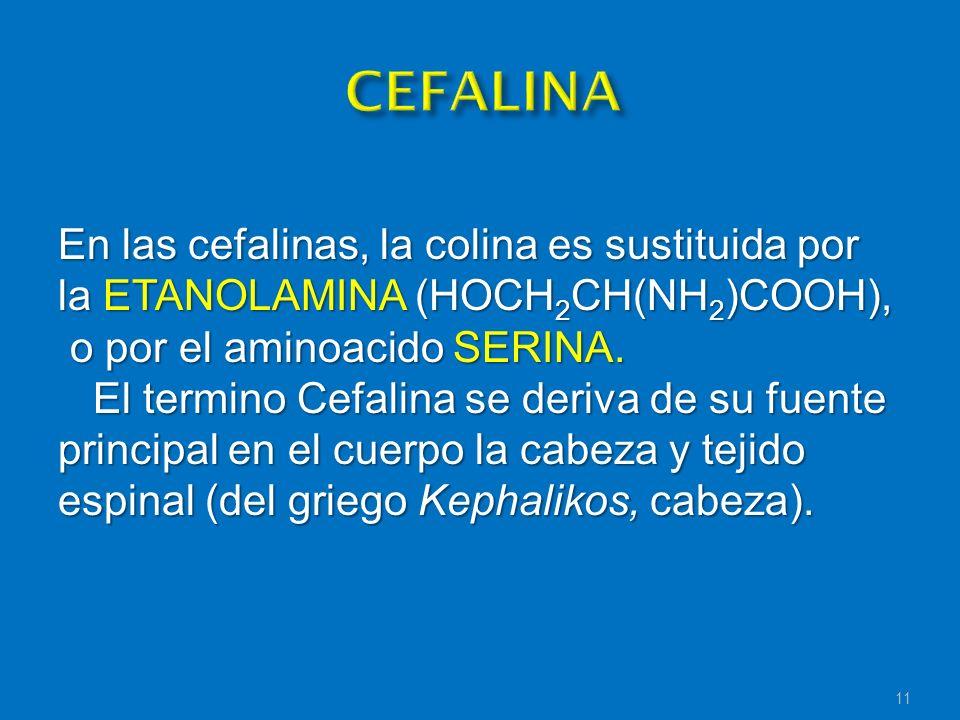 En las cefalinas, la colina es sustituida por la ETANOLAMINA (HOCH 2 CH(NH 2 )COOH), o por el aminoacido SERINA. o por el aminoacido SERINA. El termin