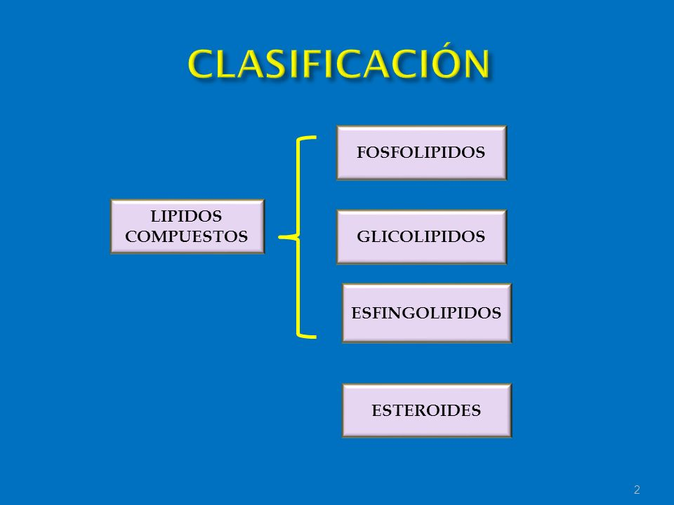 2 LIPIDOS COMPUESTOS FOSFOLIPIDOS GLICOLIPIDOS ESFINGOLIPIDOS ESTEROIDES