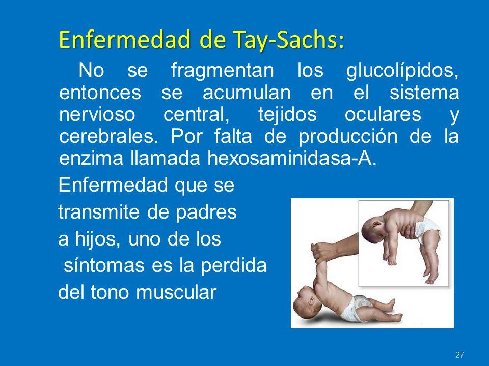 Enfermedad de Tay-Sachs: No se fragmentan los glucolípidos, entonces se acumulan en el sistema nervioso central, tejidos oculares y cerebrales. Por fa