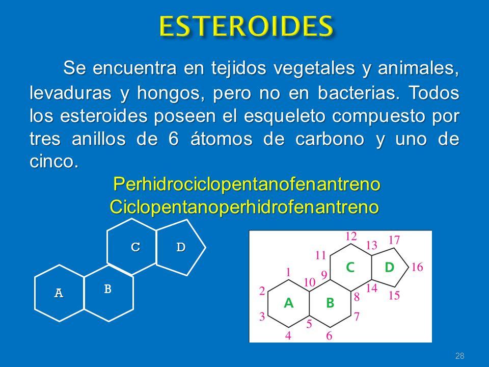 Se encuentra en tejidos vegetales y animales, levaduras y hongos, pero no en bacterias. Todos los esteroides poseen el esqueleto compuesto por tres an