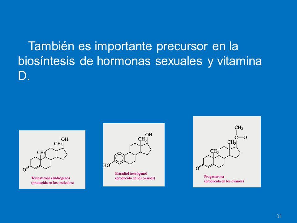 También es importante precursor en la biosíntesis de hormonas sexuales y vitamina D. 31