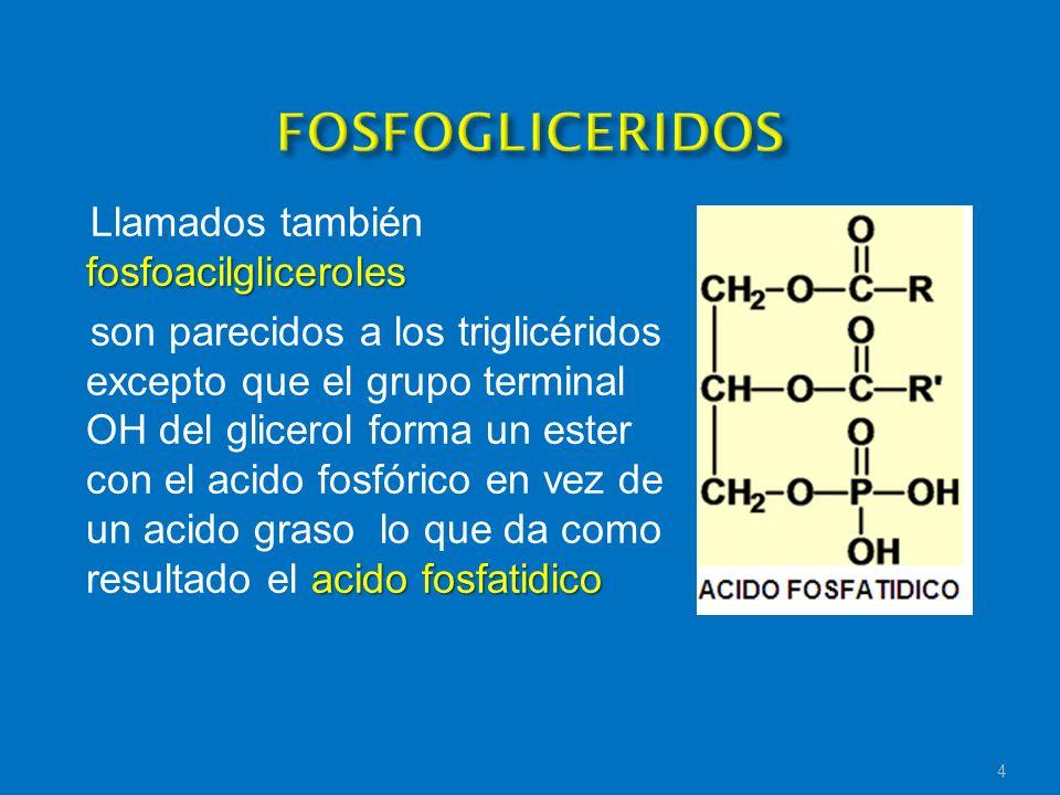 fosfoacilgliceroles Llamados también fosfoacilgliceroles acido fosfatidico son parecidos a los triglicéridos excepto que el grupo terminal OH del glic