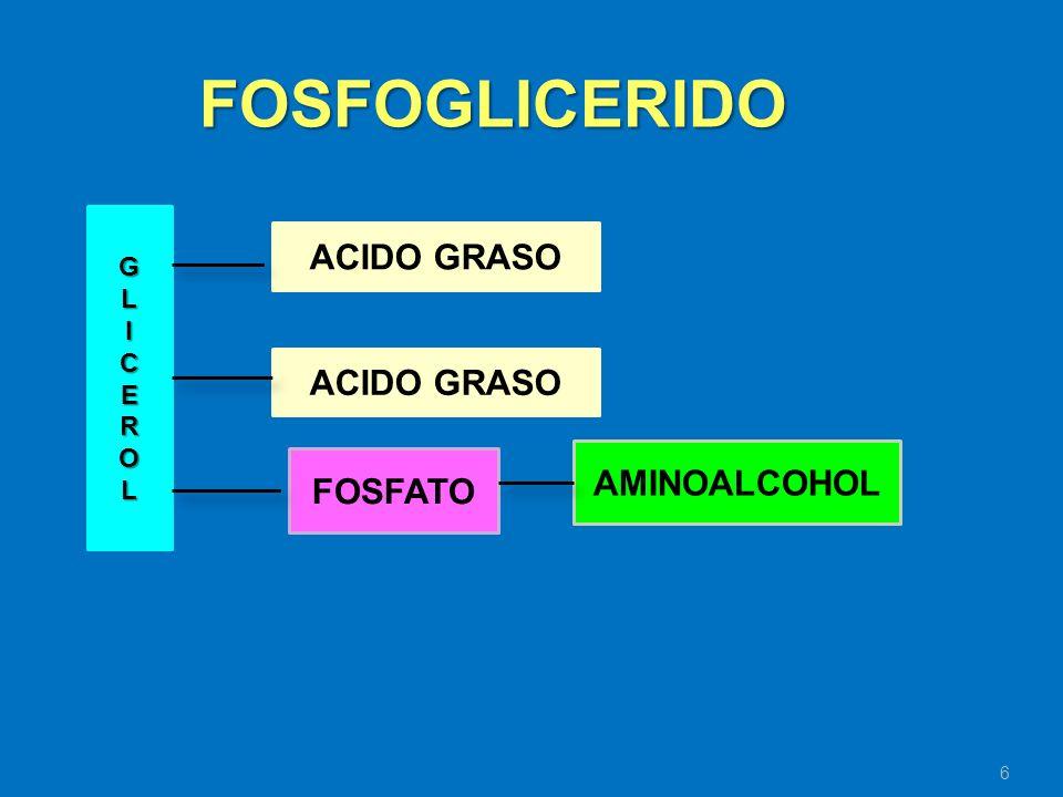 6 GLICEROL ACIDO GRASO FOSFATO AMINOALCOHOL FOSFOGLICERIDO