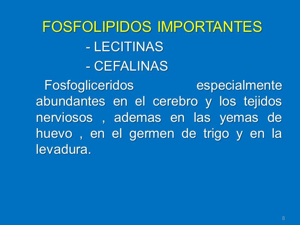 FOSFOLIPIDOS IMPORTANTES - LECITINAS - CEFALINAS Fosfogliceridos especialmente abundantes en el cerebro y los tejidos nerviosos, ademas en las yemas d