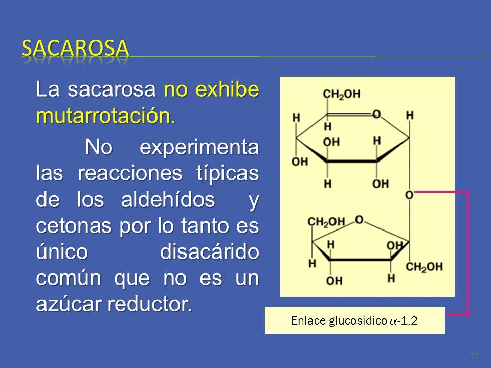 La sacarosa no exhibe mutarrotación. No experimenta las reacciones típicas de los aldehídos y cetonas por lo tanto es único disacárido común que no es