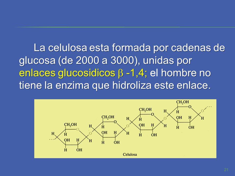 La celulosa esta formada por cadenas de glucosa (de 2000 a 3000), unidas por enlaces glucosidicos -1,4;hombre no tiene la enzima que hidroliza este en