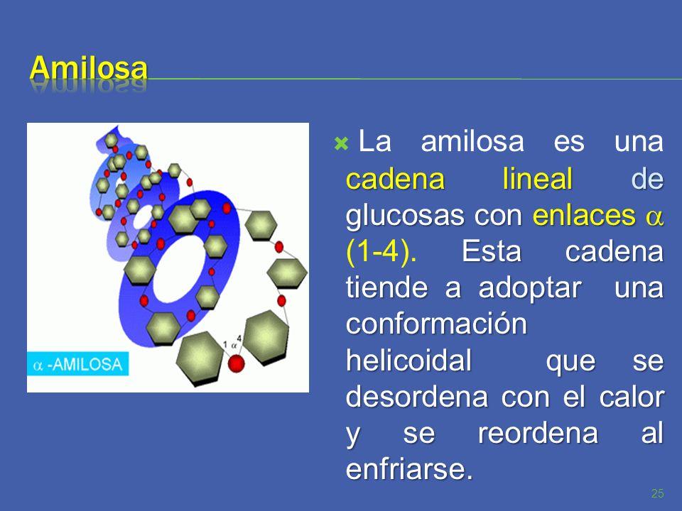 cadena lineal de glucosas con enlaces Esta cadena tiende a adoptar una conformación helicoidal que se desordena con el calor y se reordena al enfriars