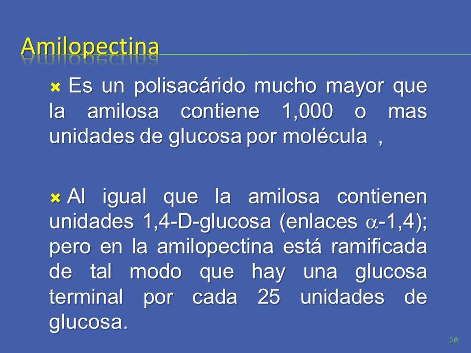 Es un polisacárido mucho mayor que la amilosa contiene 1,000 o mas unidades de glucosa por molécula, Al igual que la amilosa contienen unidades 1,4-D-