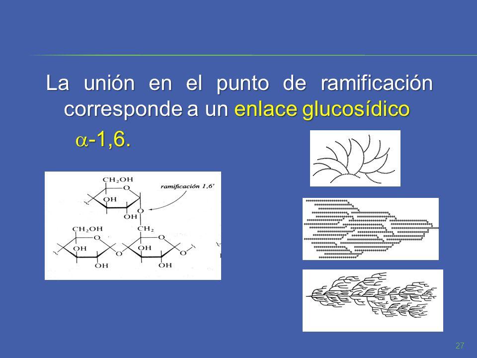 La unión en el punto de ramificación corresponde a un enlace glucosídico -1,6. -1,6. 27