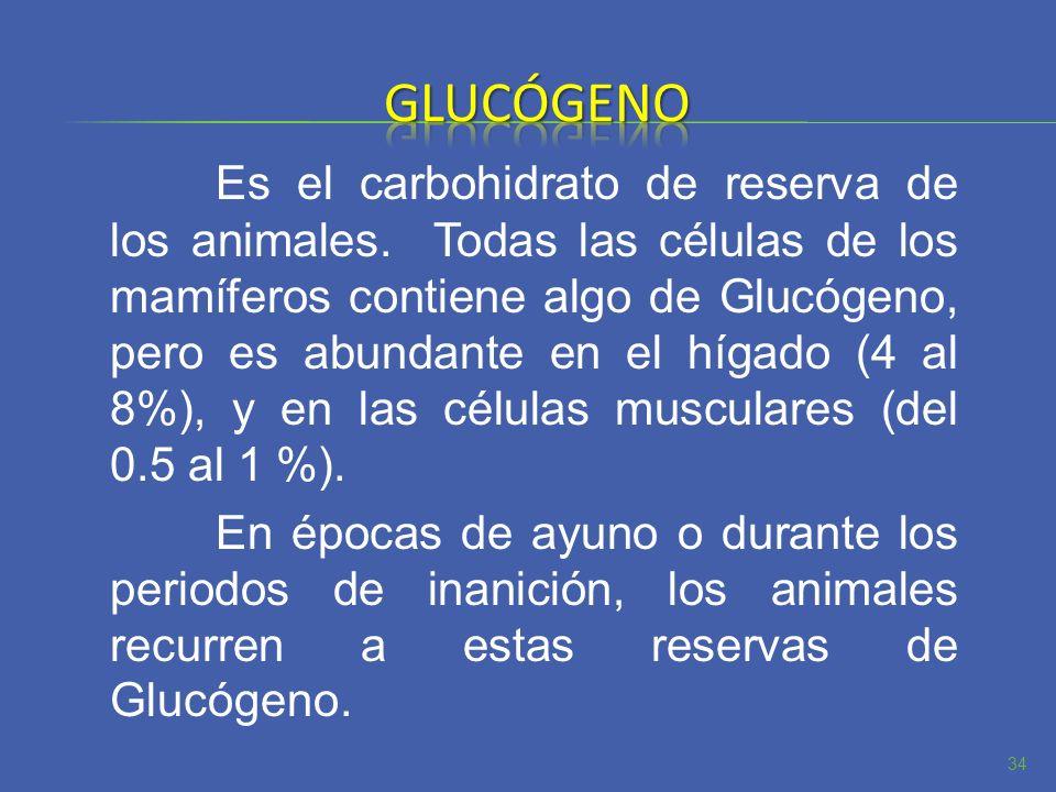 Es el carbohidrato de reserva de los animales. Todas las células de los mamíferos contiene algo de Glucógeno, pero es abundante en el hígado (4 al 8%)