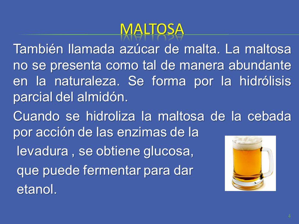 También llamada azúcar de malta. La maltosa no se presenta como tal de manera abundante en la naturaleza. Se forma por la hidrólisis parcial del almid