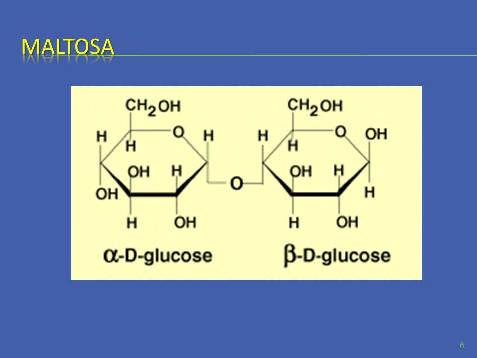Los polisacáridos son los carbohidratos mas abundantes que existen en la naturaleza.
