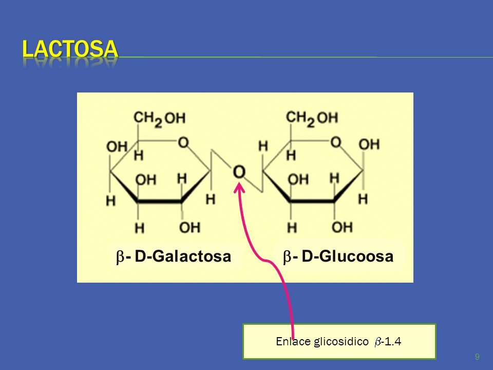 Las moléculas de celulosa son cadenas lineales de hasta 14,000 unidades de glucosa, que se agrupan en haces torsionados a manera de lazos, sujetos por puentes de hidrógeno.