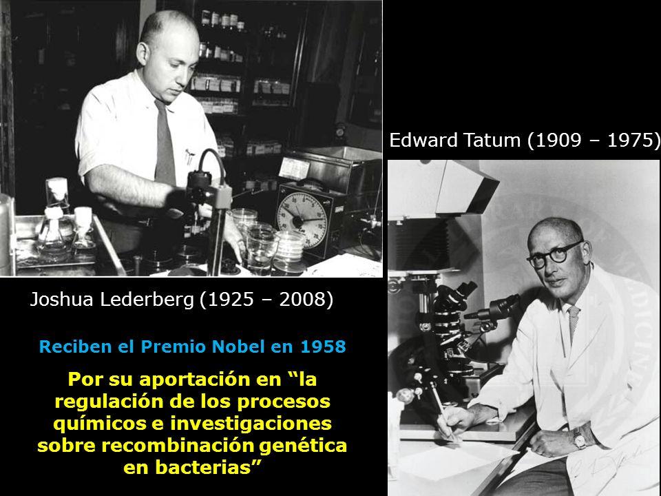 Joshua Lederberg (1925 – 2008) Edward Tatum (1909 – 1975) Reciben el Premio Nobel en 1958 Por su aportación en la regulación de los procesos químicos