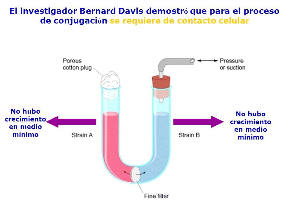 Caracteristicas generales del proceso de conjugacion 1.Se requiere contacto célula-célula (pili) 2.La transferencia de DNA ocurre en una sola dirección: donadora receptora NO VICEVERSA 3.