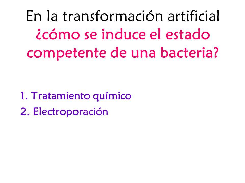En la transformación artificial ¿cómo se induce el estado competente de una bacteria? 1. Tratamiento químico 2. Electroporación