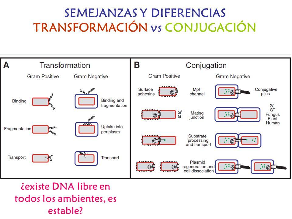 SEMEJANZAS Y DIFERENCIAS TRANSFORMACIÓN vs CONJUGACIÓN ¿existe DNA libre en todos los ambientes, es estable?