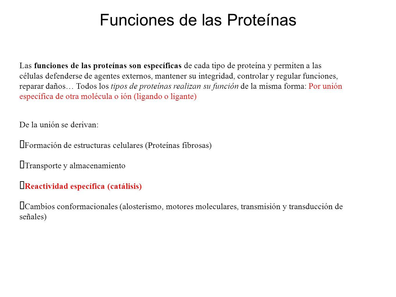 Funciones de las Proteínas Las funciones de las proteínas son específicas de cada tipo de proteína y permiten a las células defenderse de agentes exte
