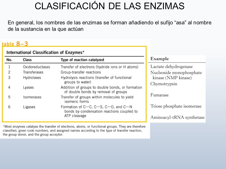 En general, los nombres de las enzimas se forman añadiendo el sufijo asa al nombre de la sustancia en la que actúan CLASIFICACIÓN DE LAS ENZIMAS