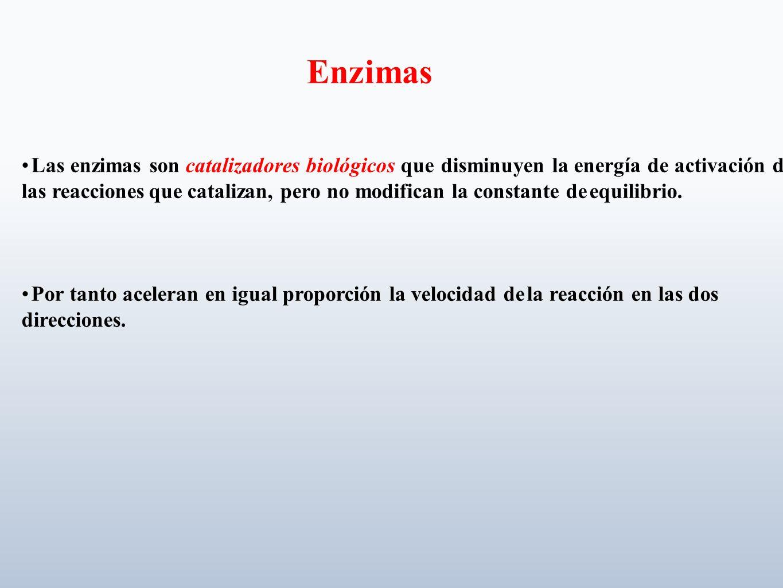 Las enzimas son catalizadores biológicos que disminuyen la energía de activación de las reacciones que catalizan, pero no modifican la constante de eq