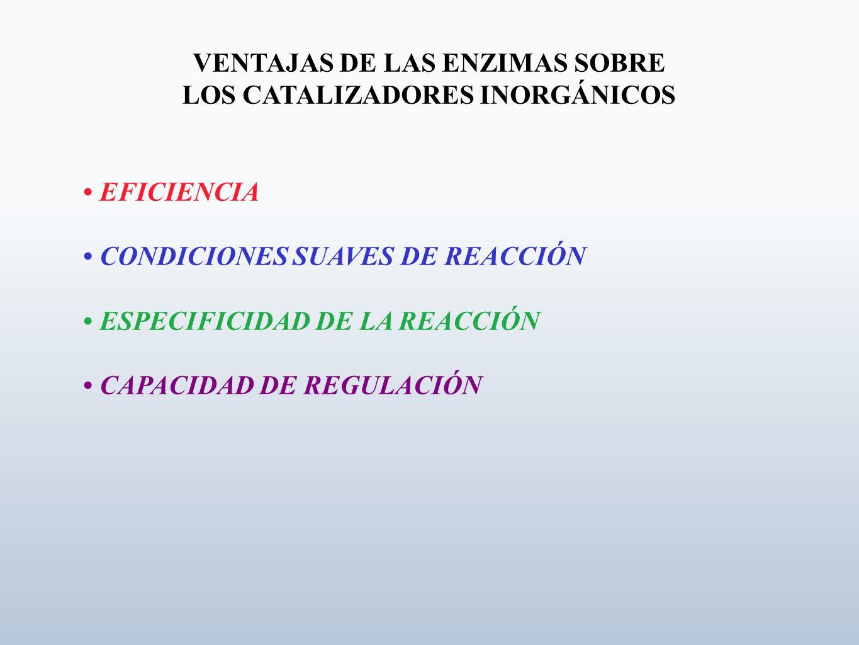 VENTAJAS DE LAS ENZIMAS SOBRE LOS CATALIZADORES INORGÁNICOS EFICIENCIA CONDICIONES SUAVES DE REACCIÓN ESPECIFICIDAD DE LA REACCIÓN CAPACIDAD DE REGULA