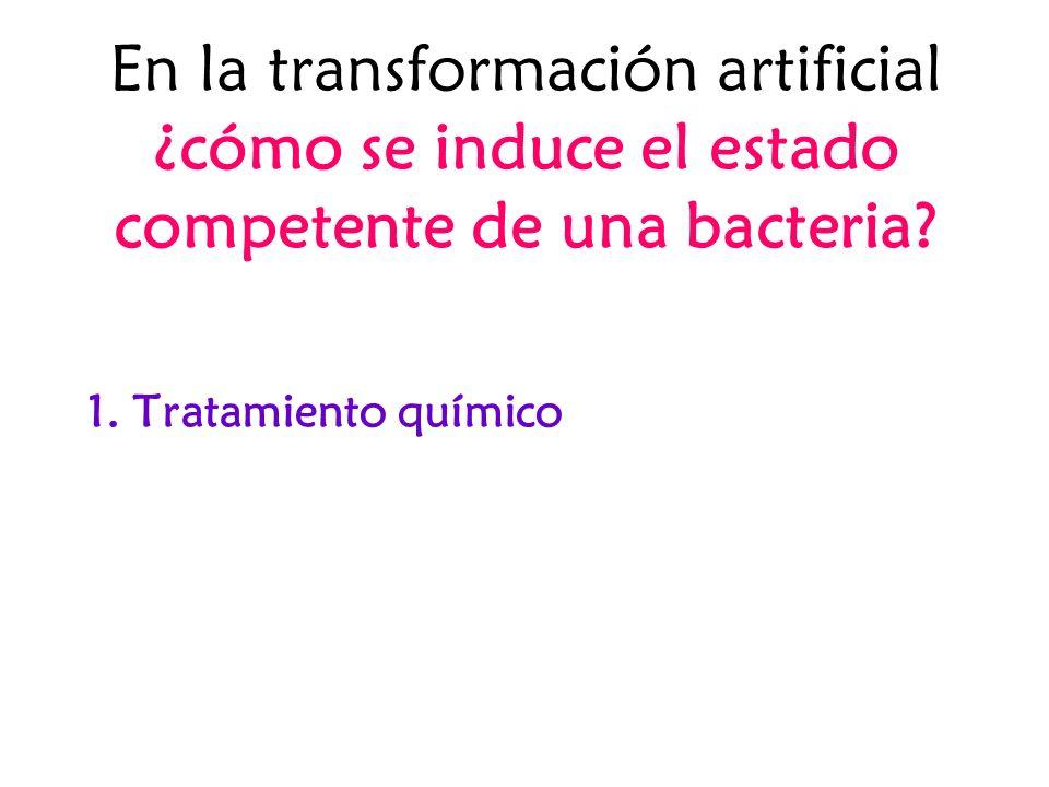En la transformación artificial ¿cómo se induce el estado competente de una bacteria? 1. Tratamiento químico