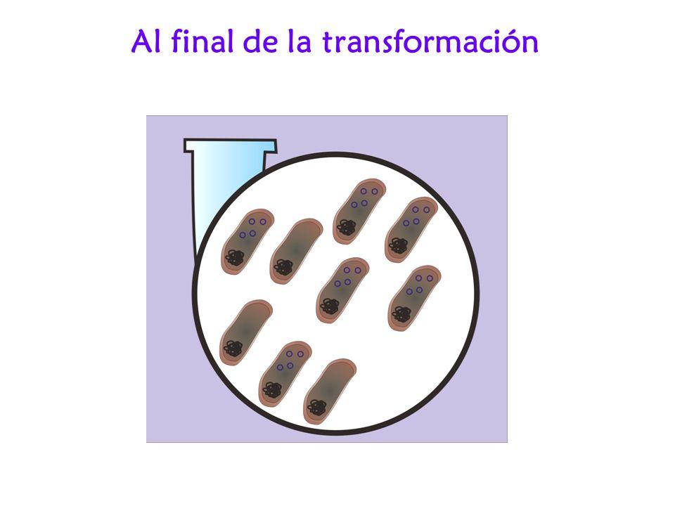Al final de la transformación