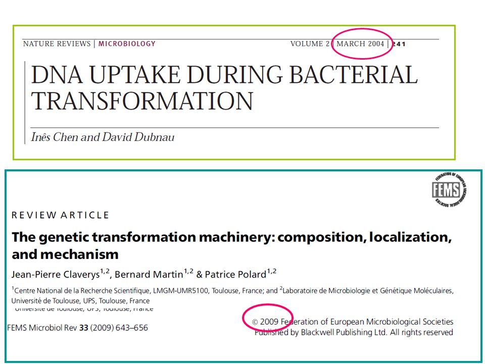 TRANSFORMACIÓN NATURAL, las bacterias más estudiadas son ETAPA 1: Desarrollo de un estado competente ETAPA 2: Procesamiento del DNA Unión Importe Recombinación GRAM + Streptococcus pneumoniae Bacillus subtilis GRAM - Neisseria gonorrhoeae Haemophilus influenzae El proceso de transformación se puede dividir en 2 ETAPAS