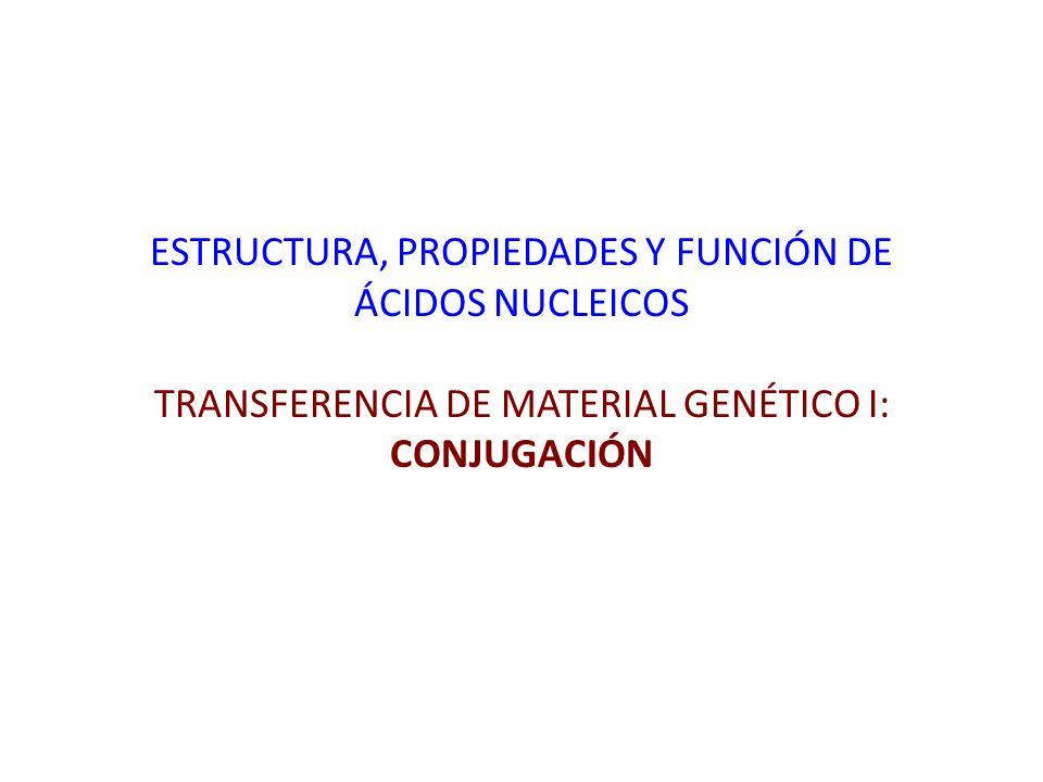 Procedimiento experimental E.coli JM1452Str R (Receptora) + E.