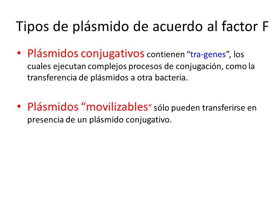 Tipos de plásmido de acuerdo al factor F Plásmidos conjugativos contienen tra-genes, los cuales ejecutan complejos procesos de conjugación, como la tr