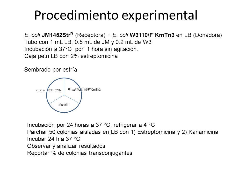 Procedimiento experimental E. coli JM1452Str R (Receptora) + E. coli W3110/F´KmTn3 en LB (Donadora) Tubo con 1 mL LB, 0.5 mL de JM y 0.2 mL de W3 Incu