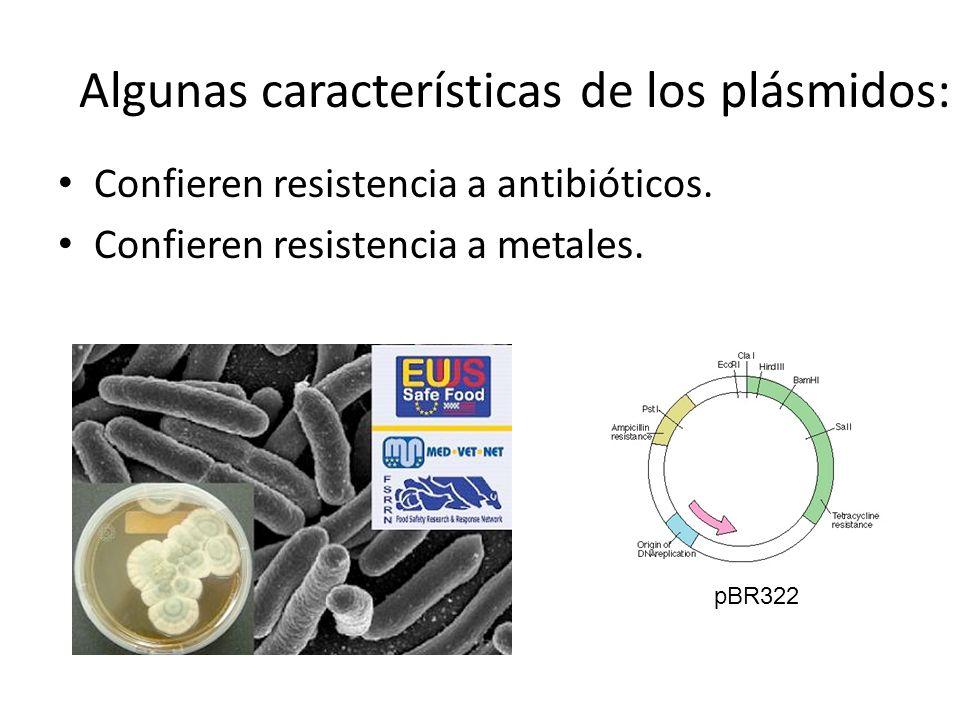 Algunas características de los plásmidos: Confieren resistencia a antibióticos. Confieren resistencia a metales. pBR322