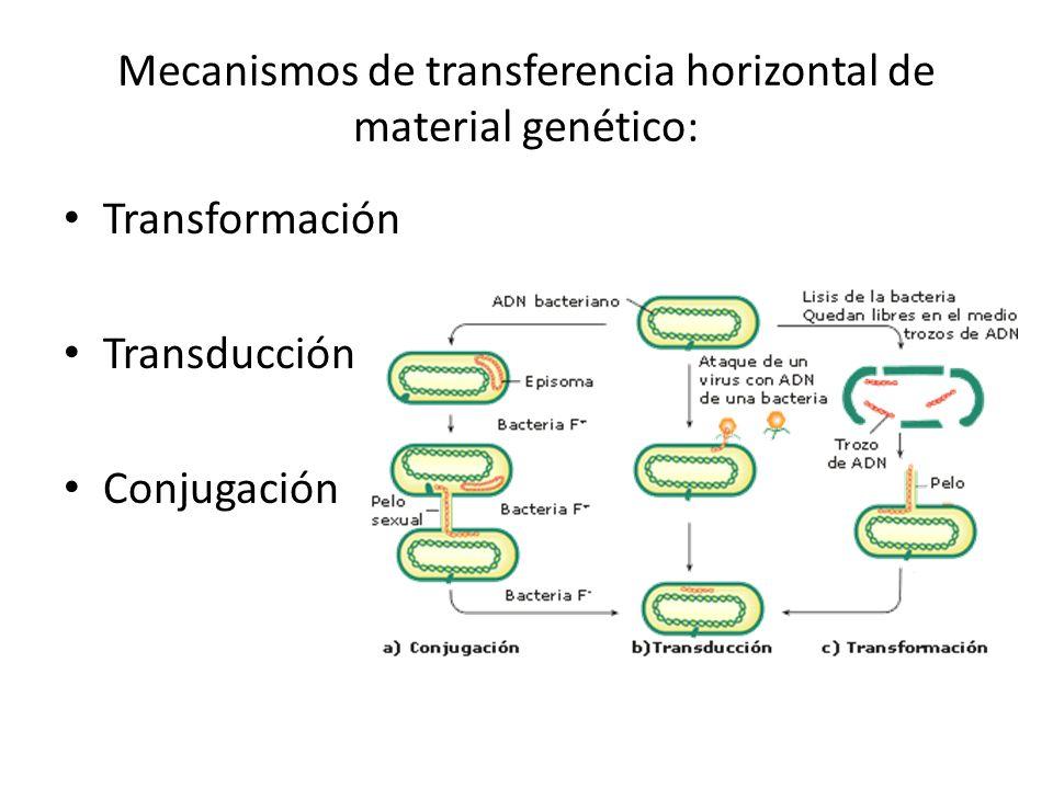 - Bacterias F + : si el factor F se encuentra libre en el citoplasma.
