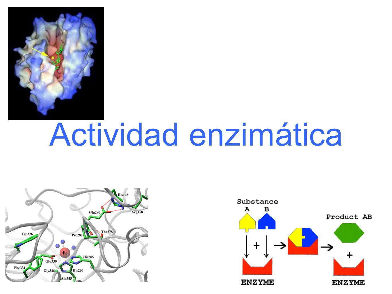 Las enzimas son catalizadores biológicos que disminuyen la energía de activación de las reacciones que catalizan, pero no modifican la constante de equilibrio.