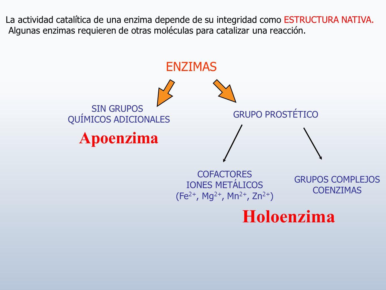 La actividad catalítica de una enzima depende de su integridad como ESTRUCTURA NATIVA. Algunas enzimas requieren de otras moléculas para catalizar una