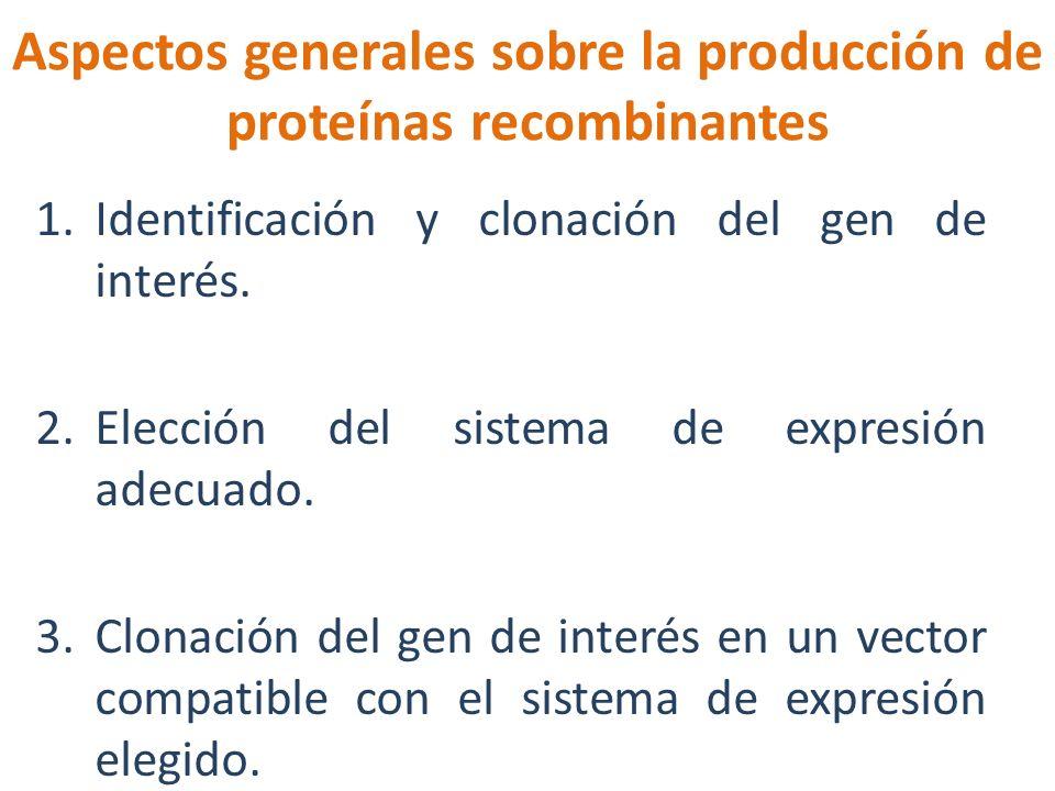 Aspectos generales sobre la producción de proteínas recombinantes 1.Identificación y clonación del gen de interés. 2.Elección del sistema de expresión