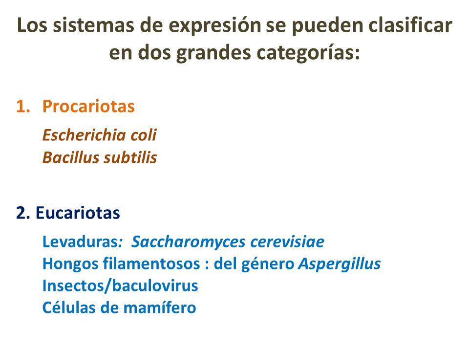Los sistemas de expresión se pueden clasificar en dos grandes categorías: 1.Procariotas Escherichia coli Bacillus subtilis 2. Eucariotas Levaduras: Sa