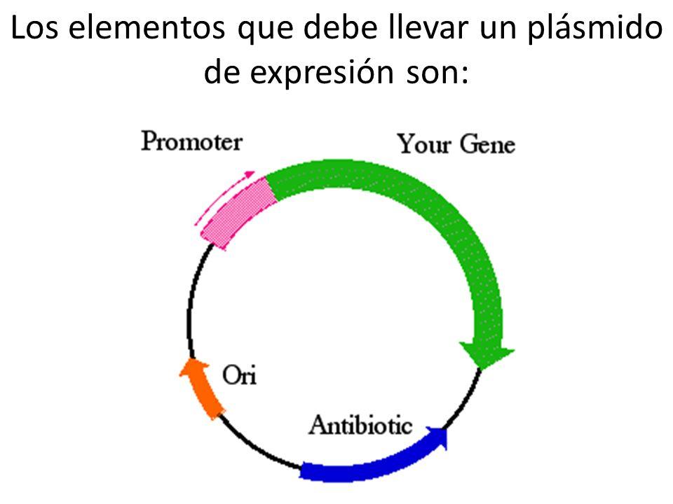 Los elementos que debe llevar un plásmido de expresión son: