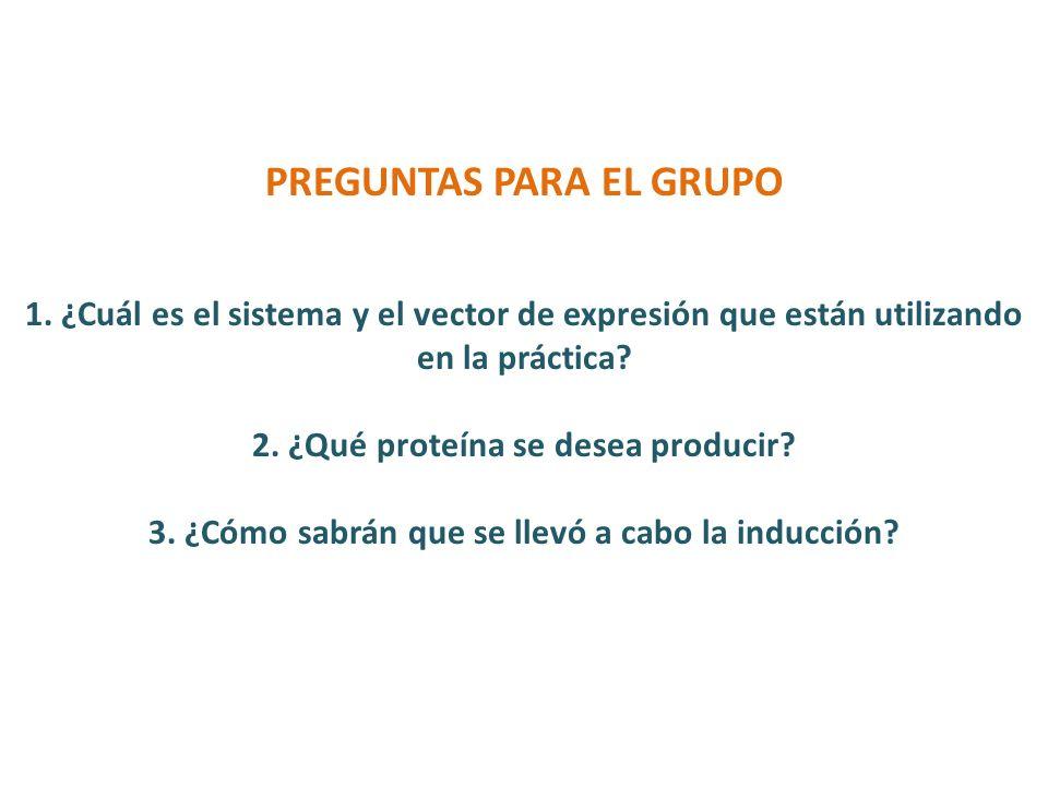 ¿Cuál es el sistema y el vector de expresión que están utilizando en la práctica.