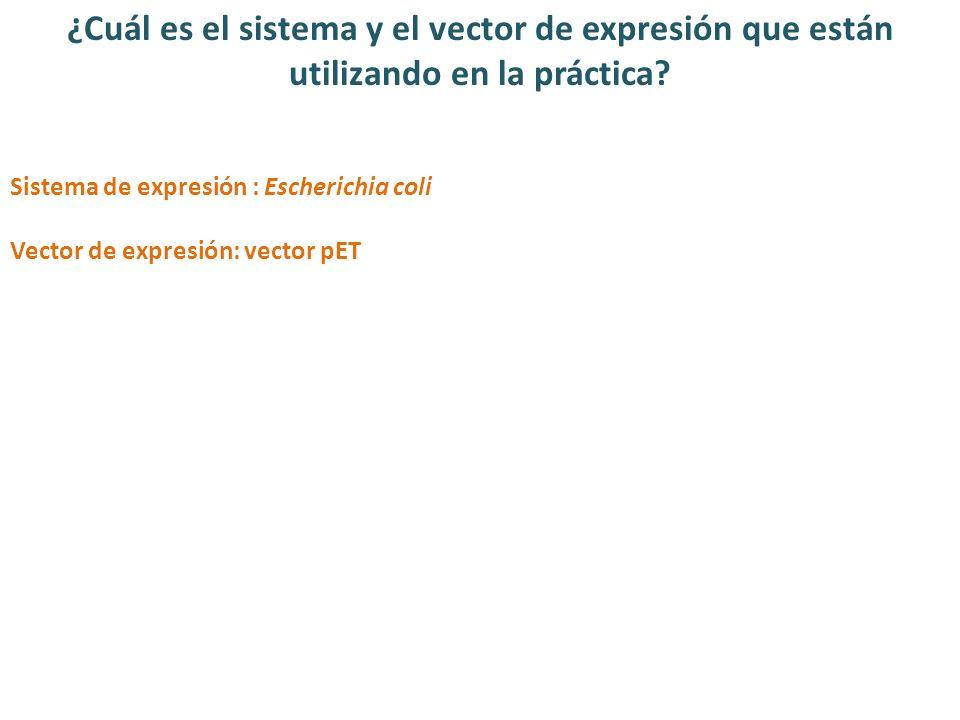 ¿Cuál es el sistema y el vector de expresión que están utilizando en la práctica? Sistema de expresión : Escherichia coli Vector de expresión: vector