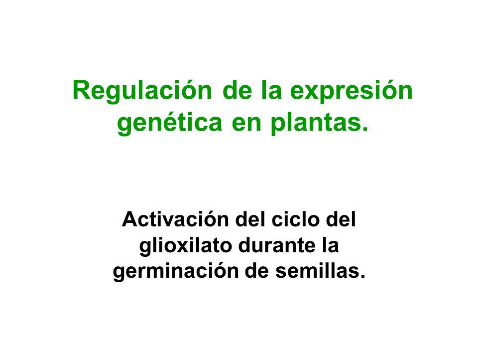 Regulación de la expresión genética en plantas. Activación del ciclo del glioxilato durante la germinación de semillas.