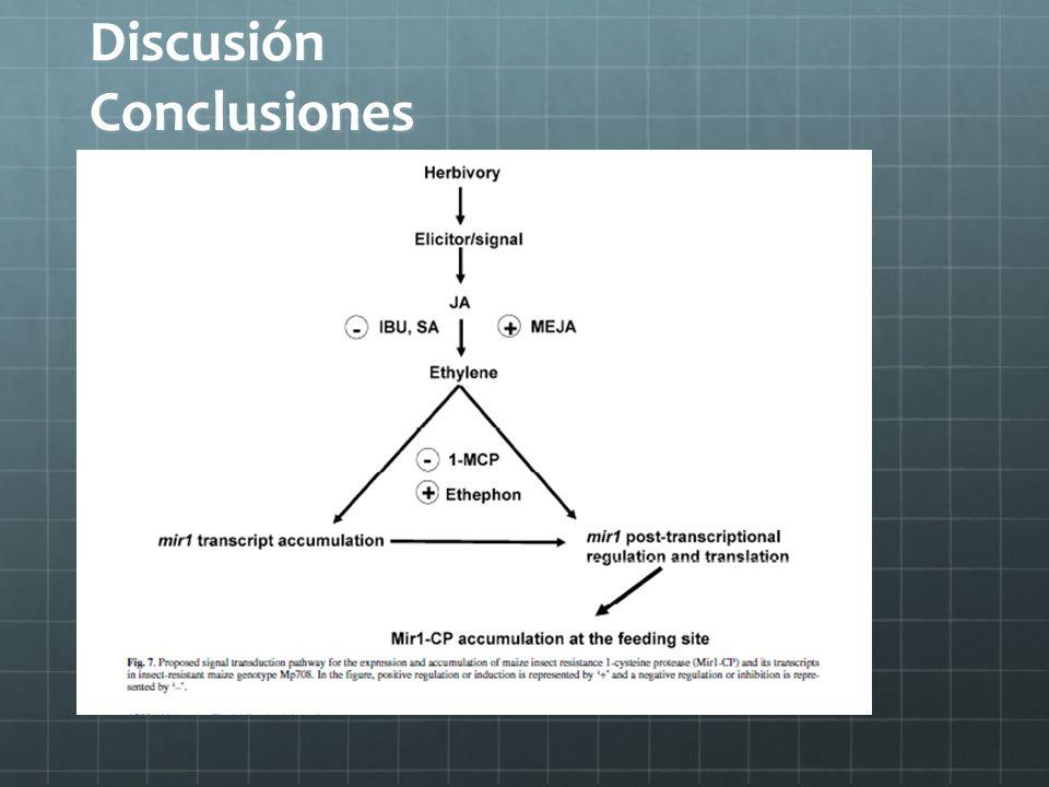 Discusión Conclusiones
