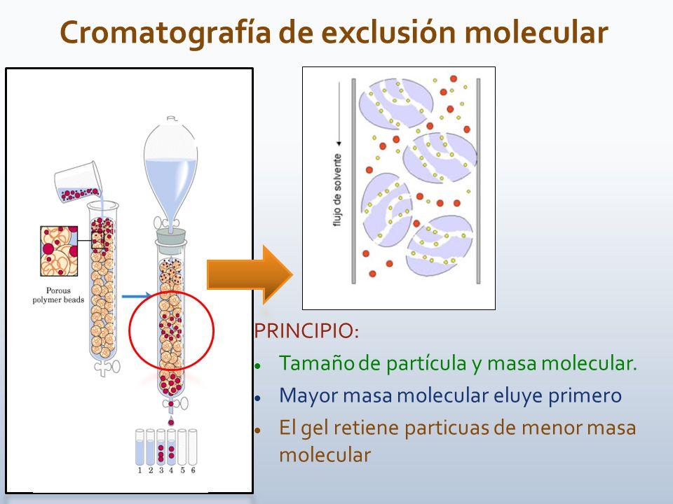 PRINCIPIO: Tamaño de partícula y masa molecular. Mayor masa molecular eluye primero El gel retiene particuas de menor masa molecular