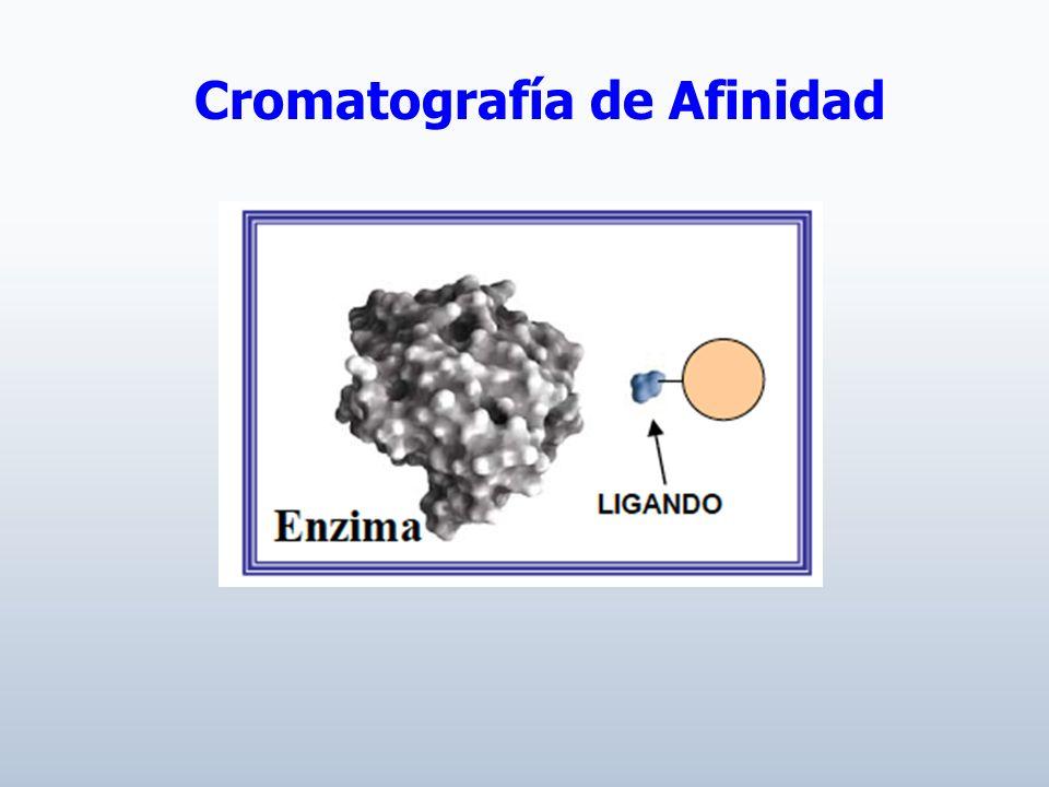 Cromatografía de Afinidad