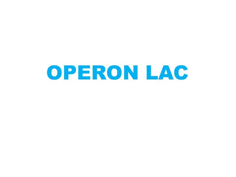 OPERON LAC