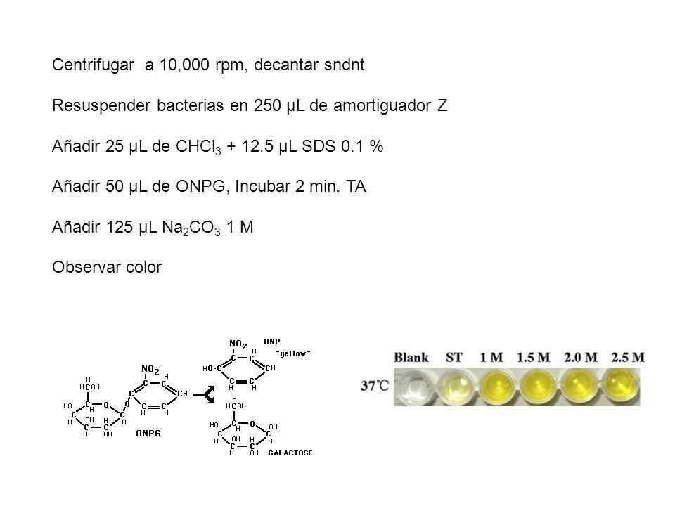 Centrifugar a 10,000 rpm, decantar sndnt Resuspender bacterias en 250 µL de amortiguador Z Añadir 25 µL de CHCl 3 + 12.5 µL SDS 0.1 % Añadir 50 µL de