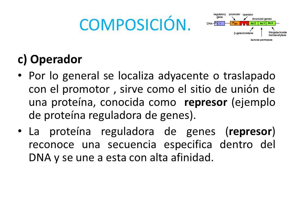 COMPOSICIÓN. c) Operador Por lo general se localiza adyacente o traslapado con el promotor, sirve como el sitio de unión de una proteína, conocida com