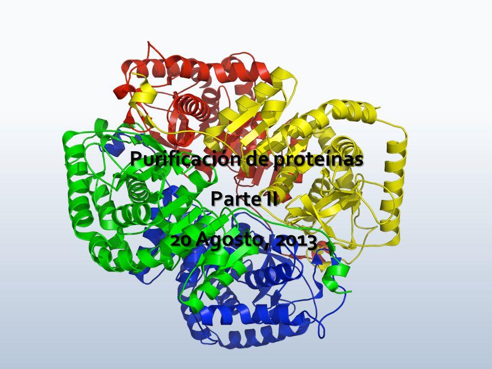 Proceso que cuenta con varias etapas cuyo objetivo es lograr la concentración diferencial de una proteína o molécula de interés