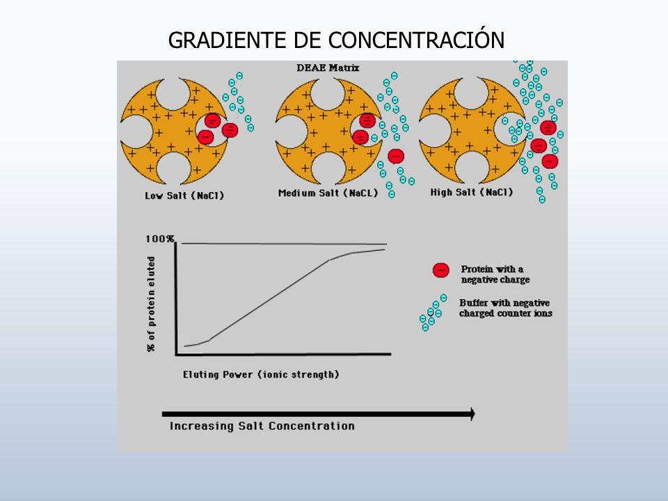 GRADIENTE DE CONCENTRACIÓN